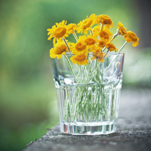 Favim.com-flowers-glass-photography-spring-sun-226600